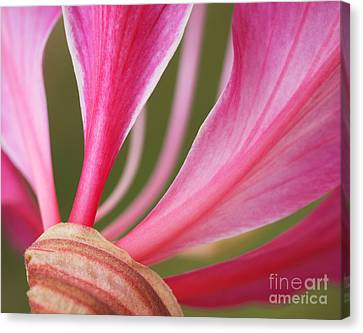 Pink Stripes Canvas Print