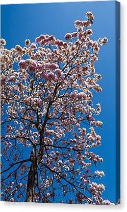 Pink Structure Canvas Print by Mario Morales Rubi