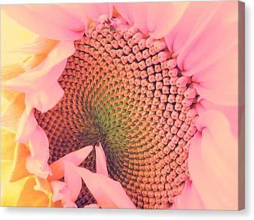 Pink Sunflower Canvas Print by Marianna Mills