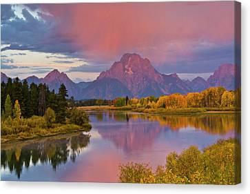 Populus Tremuloides Canvas Print - Pink Sunrise, Oxbow, Grand Teton by Michel Hersen