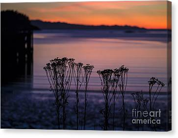 Pink Sunset Canvas Print