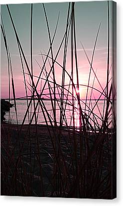 Pink Sunset Canvas Print by Marianna Mills