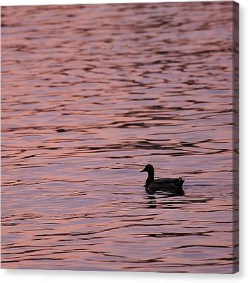 Canvas Print featuring the photograph Pink Sunset With Duck In Silhouette by Marianne Campolongo