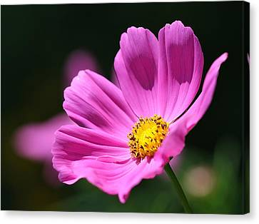Pink Canvas Print by Tracy Male