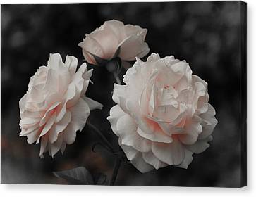 Canvas Print featuring the photograph Pink Trio by Michelle Joseph-Long