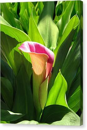 Pink Trumpet Lily Canvas Print by Schwartz