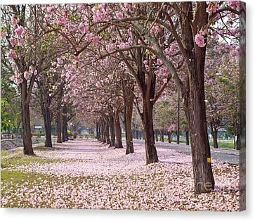 Pink Trumpet Tree Canvas Print
