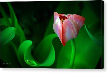 Pink Tulip Canvas Print by Brian Wallace
