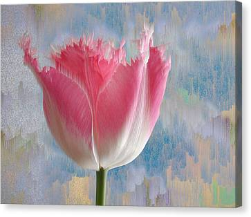 Pink Tulip Canvas Print by Mark Greenberg
