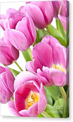 Pink Tulips Canvas Print by Elena Elisseeva