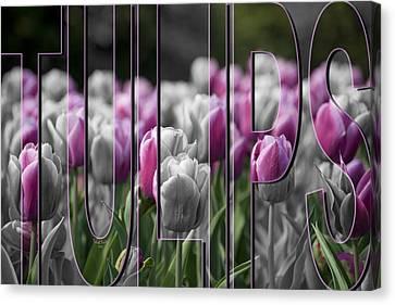 Pink Tulips Canvas Print by Trish Tritz