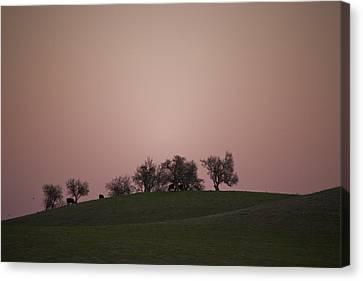 Pink Twilight Canvas Print by Joel Moranton