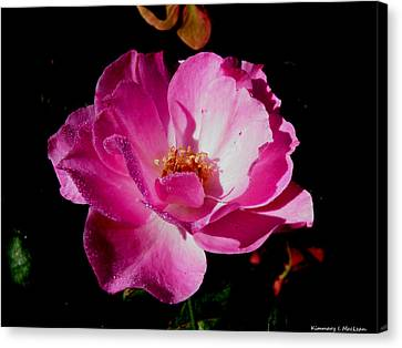 Pink Velvet Canvas Print