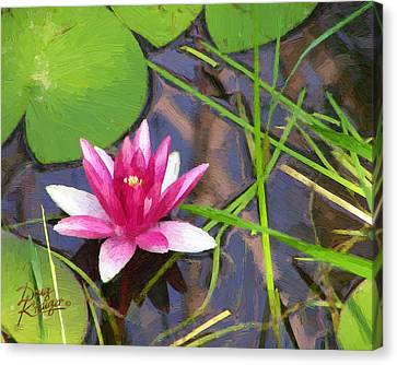 Canvas Print featuring the painting Pink Water Lily by Doug Kreuger