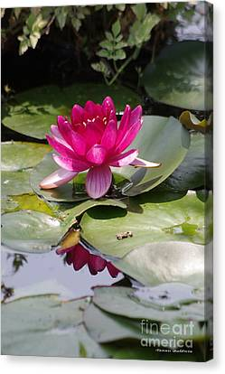 Canvas Print - Pink Water Lily by Tannis  Baldwin