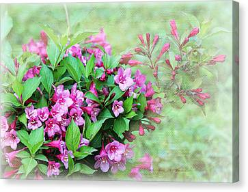 Canvas Print featuring the photograph Pink Weigela by Trina  Ansel