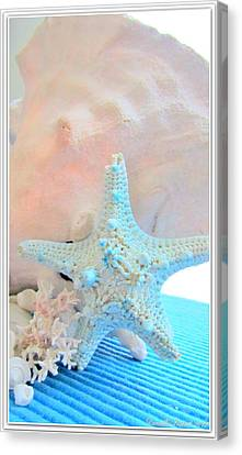 Pink White And Blue Conch And Sea Shells  Canvas Print by Danielle  Parent