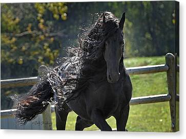 The Horse Canvas Print - Pinnacle Of Friesians by Pinnacle Friesians