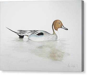 Duck Canvas Print - Pintail Duck by Ele Grafton