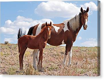 Pinto Mare And Foal Canvas Print by Lula Adams