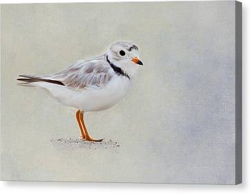 Piping Plover Canvas Print by Bill Wakeley