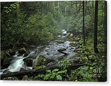 Pisgah Forest  Canvas Print