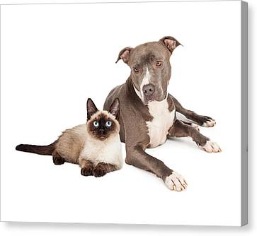 Pit Bull Dog And Siamese Cat Canvas Print by Susan Schmitz
