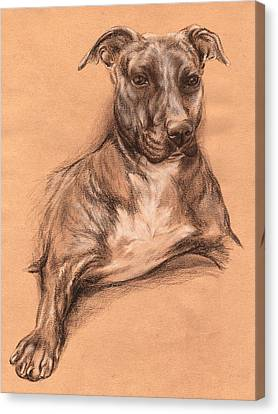 Pit Bull Portrait - Tea Dyed Charcoal Canvas Print by MM Anderson