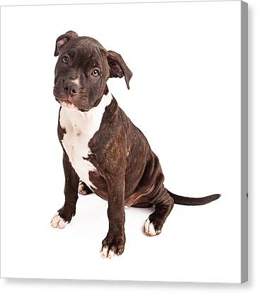 Pit Bull Puppy Black And White Canvas Print by Susan Schmitz