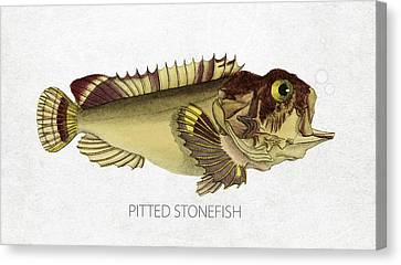 Pitted Stonefish Canvas Print by Aged Pixel