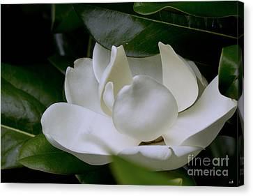 Plain Magnolia Canvas Print