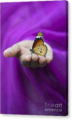 Plain Tiger Butterfly Canvas Print by Tim Gainey