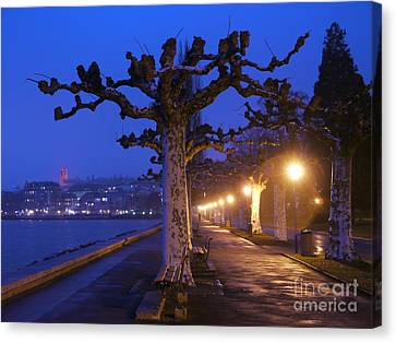 Plane Trees And Lake Geneva, Vevey Canvas Print by Adam Sylvester