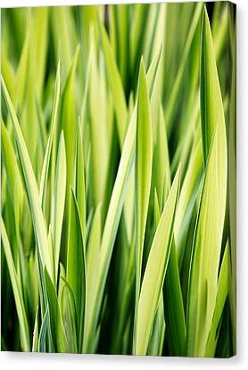 Plant Abstract 3 Canvas Print by Rebecca Cozart