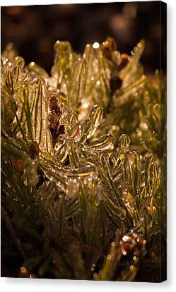 Canvas Print featuring the photograph Plant Covered In Ice by Dave Garner
