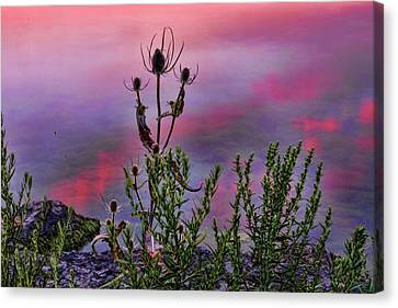 Plant Life By The Water Canvas Print