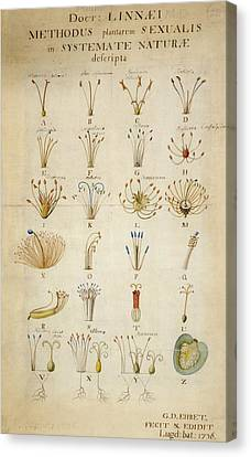 Plant Reproduction, 18th Century Canvas Print by Science Photo Library