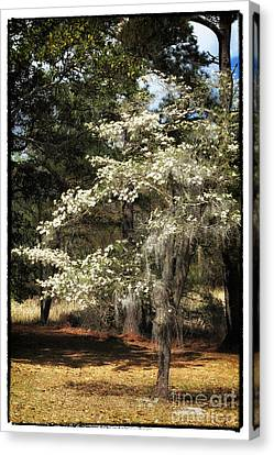 Plantation Tree Canvas Print by John Rizzuto