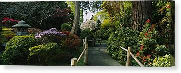 Garden Scene Canvas Print - Plants In A Garden, Japanese Tea by Panoramic Images