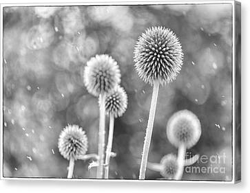 Plants In The Rain Canvas Print by Natalie Kinnear