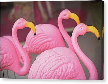 Plastic Pink Flamingos, Charleston Canvas Print
