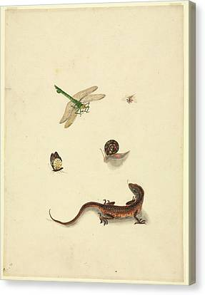 Plate 101 Canvas Print by Natural History Museum, London