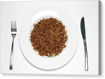 Plate Of Mealworm Canvas Print
