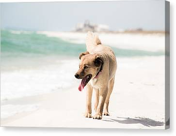 Play Buddy Canvas Print by Shelby  Young