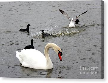 Playful Fun On The Lake Canvas Print by Kathy  White