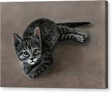 Playful Kitten Canvas Print