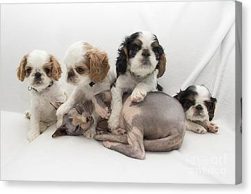 Playful Puppies Canvas Print