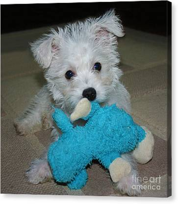 Playful Puppy Canvas Print by Terri Waters