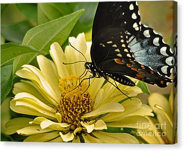 Playing Among The Zinnias Canvas Print by Nava Thompson