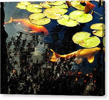 Scenery Canvas Print - Playing Koi 2 by Kim Bemis